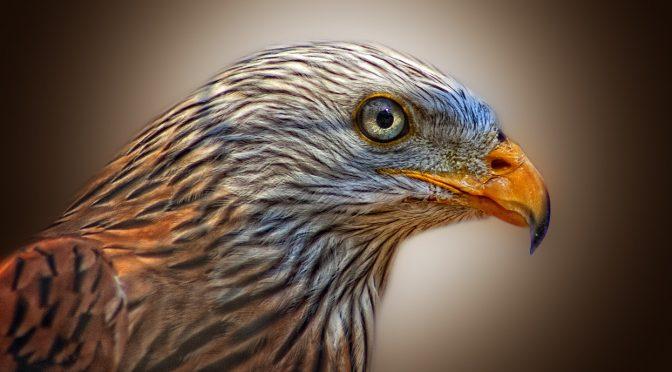 Védjük a természetet – óvjuk a madarakat